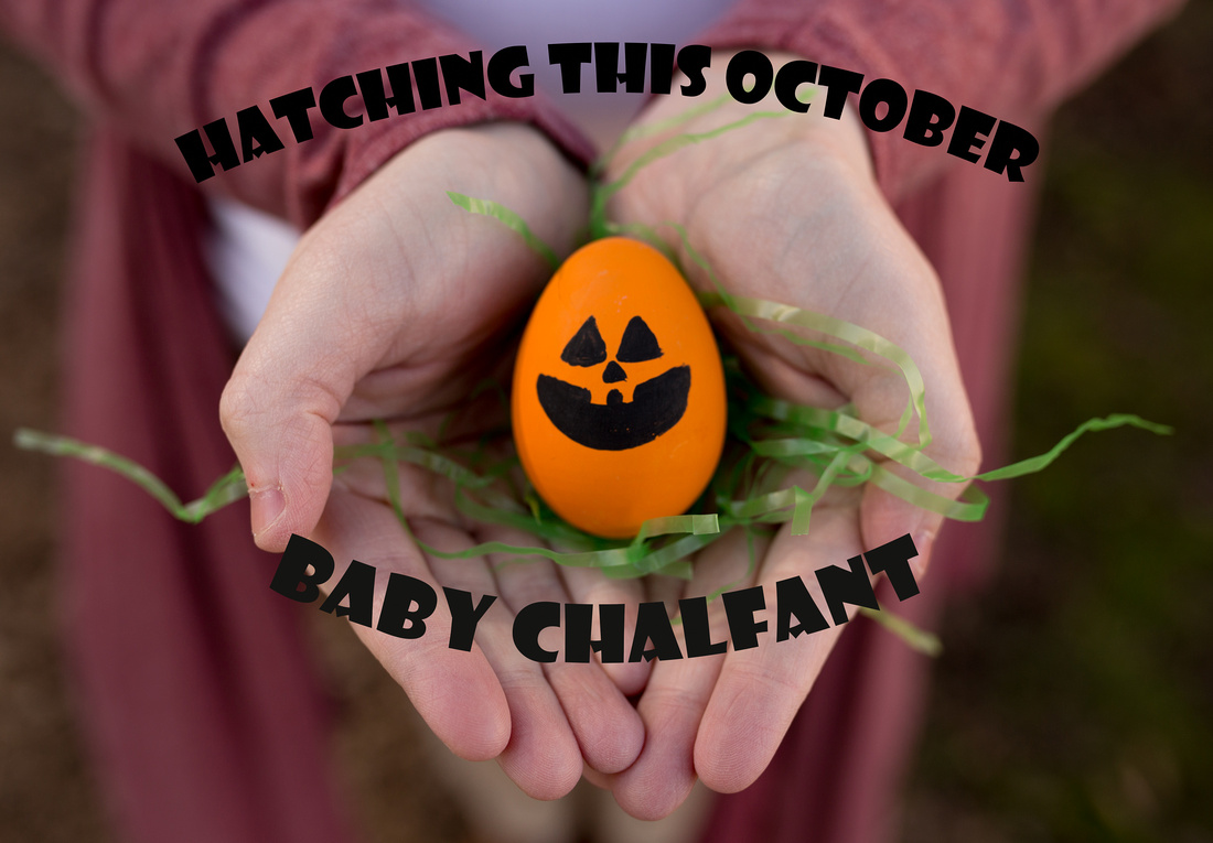 Chalfant announcement mini-21